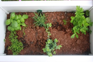 herb garden on top